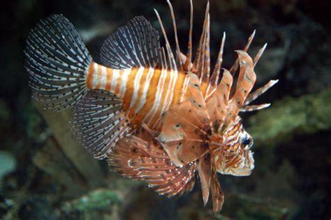 Lionfish slots jpg 1024x681